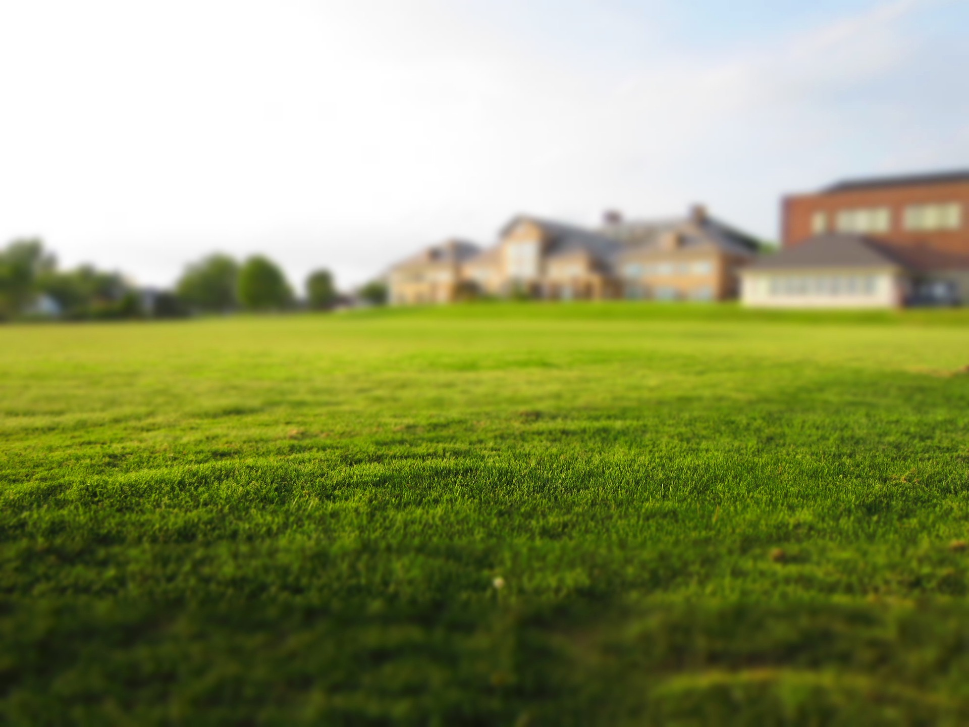 Ein schöner Rasen braucht viel Pflege